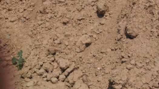 jílovitá hlína