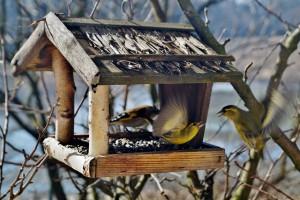 ptačí symfonie