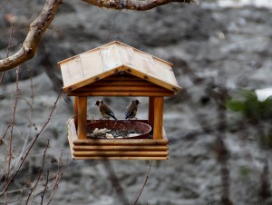 ptačí krmítko