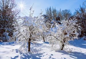 stromy v zime