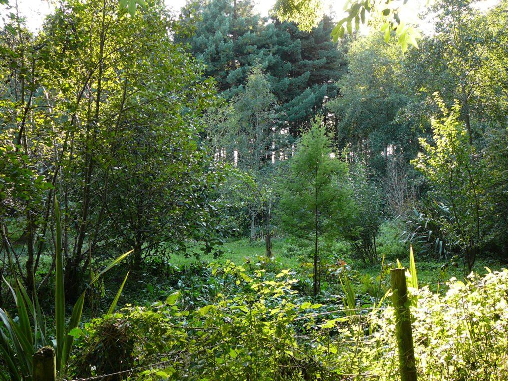 zahrada inspirovaná lesem