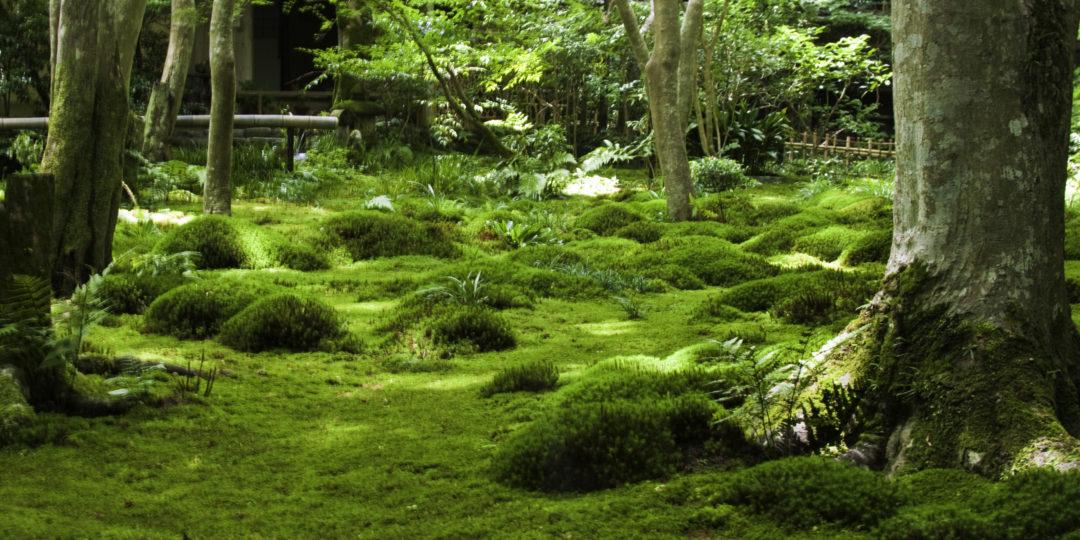 lesní zahrada