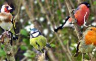 ptáčci na zahradě