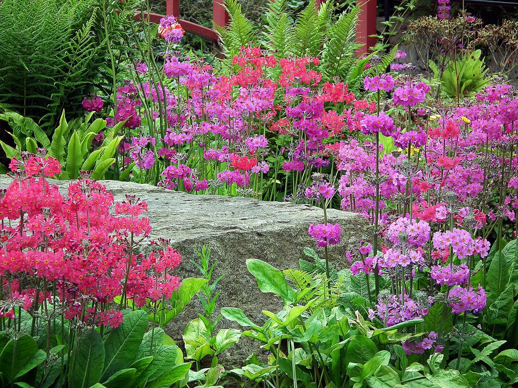 květiny na skalce
