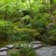 Buďte v těsném kontaktu s přírodou díky přírodní zahradě